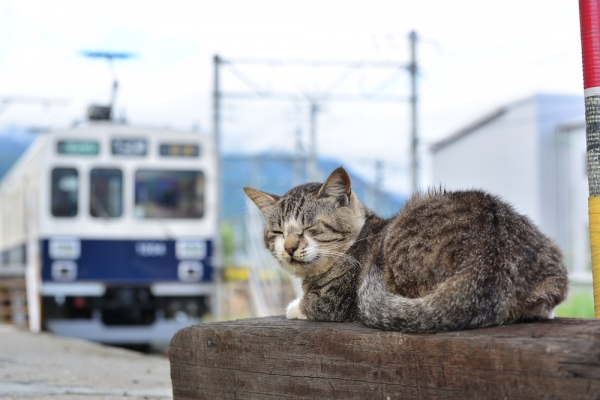 2015年9月18日 上田電鉄別所線 下之郷 1000系1004編成
