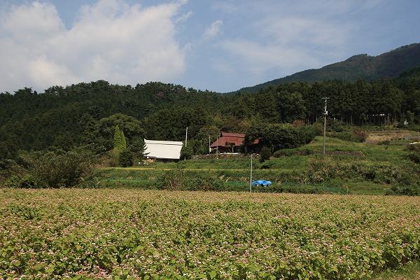 井内赤蕎麦 151004 03