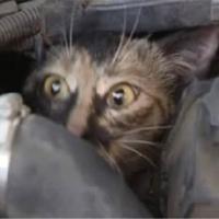 エンジンルームに入った猫
