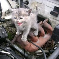 エンジンルーム上の猫