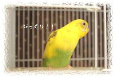 ほっそり*ぴーちゃん