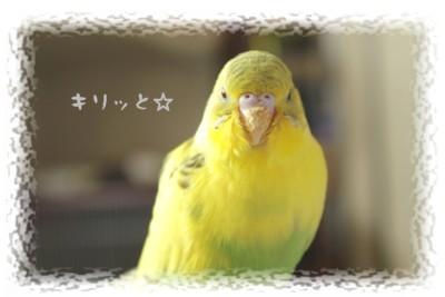 正面*ぴーちゃん