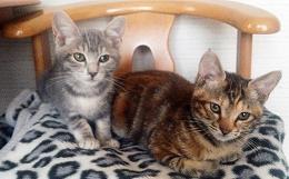 2015924姉妹ネコ