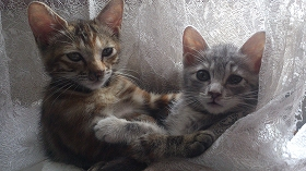 2015922仔猫姉妹