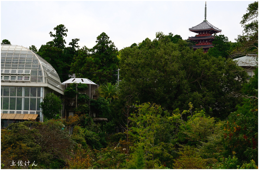高知・牧野植物園4