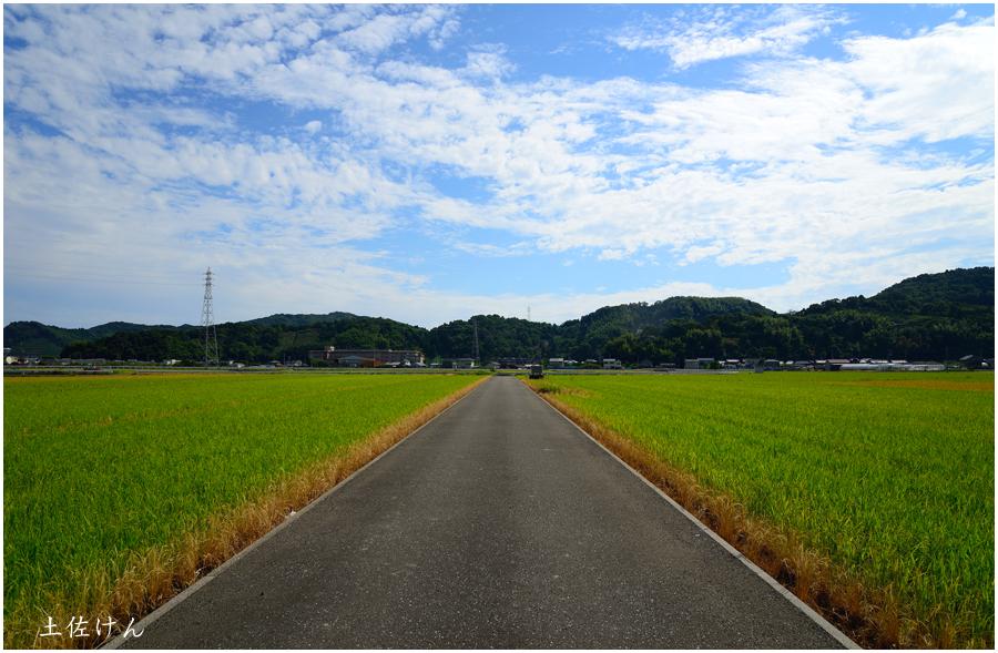 高知・田園風景4