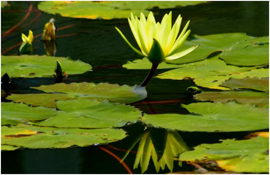 京都植物園・助手3
