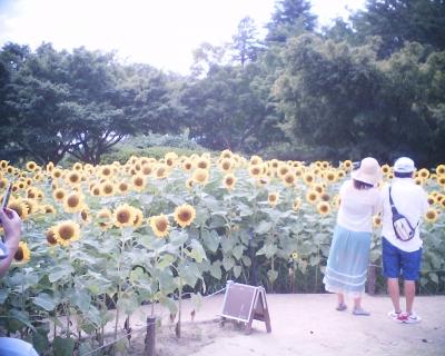仲良くひまわり畑で・昭和記念公園:R2