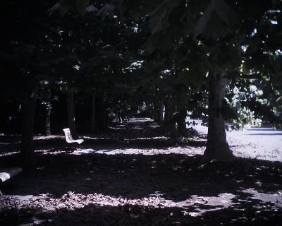 プラタナス並木の下に・新宿御苑:R2