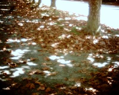 プラタナス並木の下に2・新宿御苑:Entry