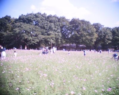 昭和記念公園・コスモス2015:R2