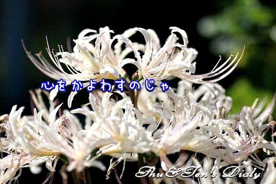 004IMG_0511.jpg
