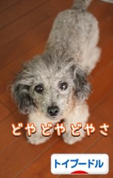 011bnIMG_9062.jpg