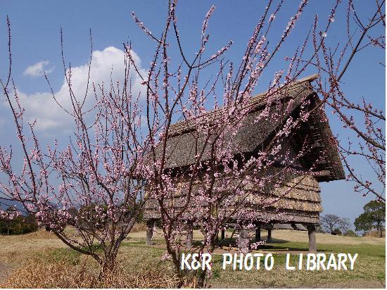 3月21日南のムラ・風景2