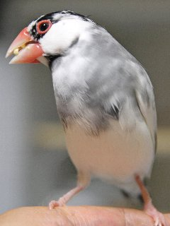 やっぱり放鳥はいーなぁ~♪