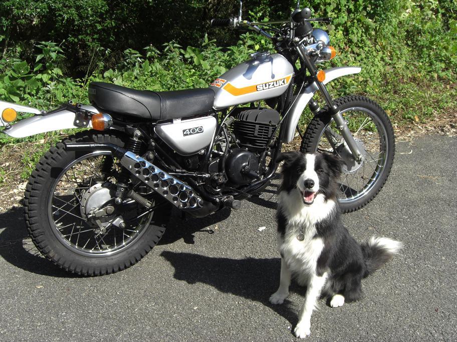 Ts400マフラープロテクターと犬