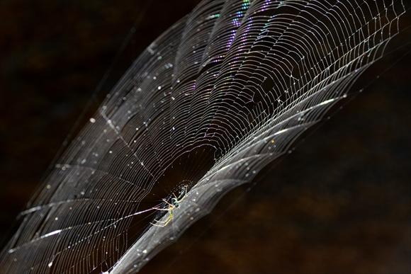 クモの巣-1_R