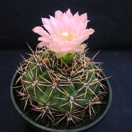 Sany0024-achirasense-LB330--La Punilla, San Luis--Eden11573
