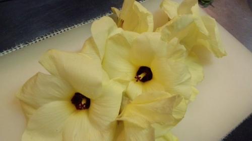 オクラの花1