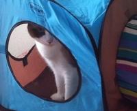 2015年09月29日猫ハウスと瑠璃05-mini