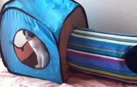 2015年09月29日猫ハウスと瑠璃06-mini