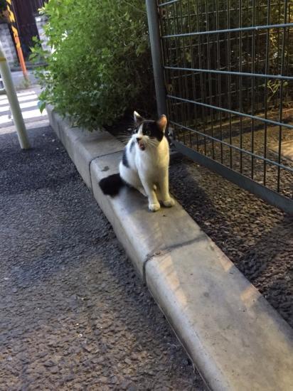 IMG_0028 2urabanashi