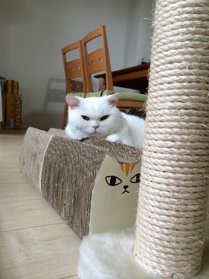 IMG_0009urabanashi.jpg