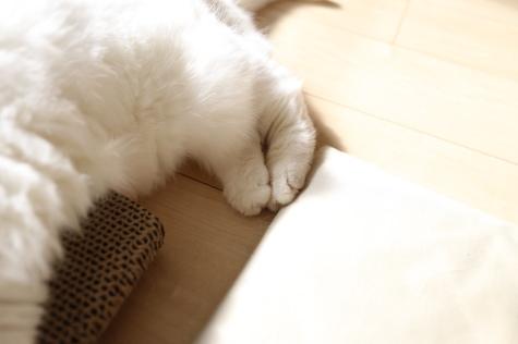 IMG_6875urabanashi.jpg