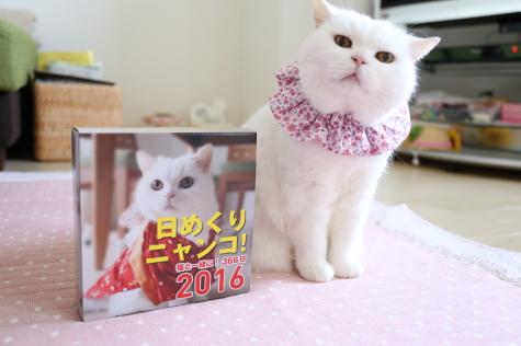 IMG_8509urabanashi.jpg