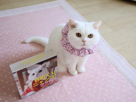 IMG_8513urabanashi.jpg