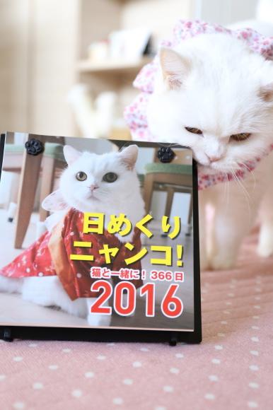 IMG_8574urabanashi.jpg
