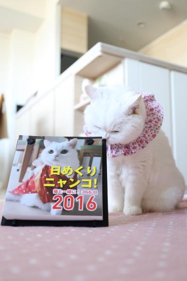 IMG_8586urabanashi.jpg