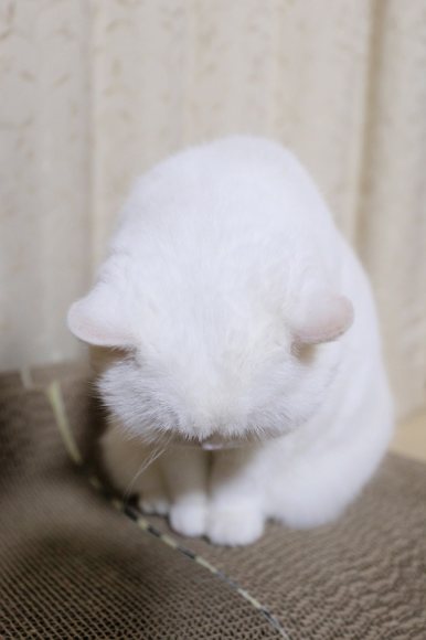 IMG_8807urabanashi.jpg