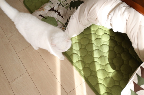 IMG_9013urabanashi.jpg