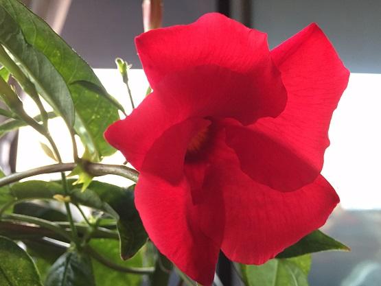 赤いサマーパラソル
