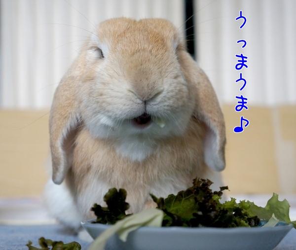 お口ふきふき~1