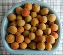 追熟した梅の実