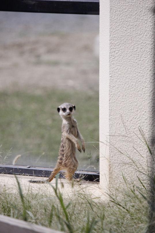 '15.9.12 meerkat 2325