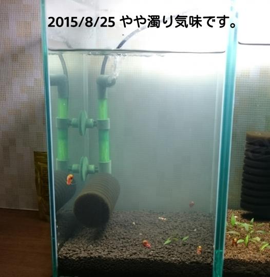 201508252321150da.jpg