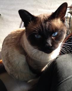 青い目。とんがり耳。