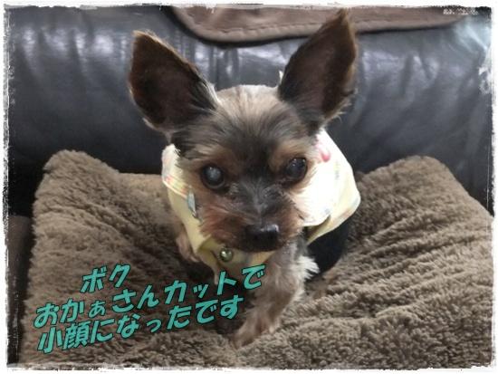2015_0908秋かな0019