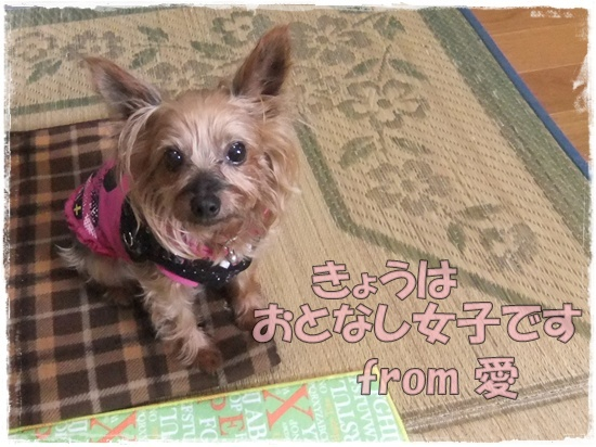 2015_1001chicoと0002