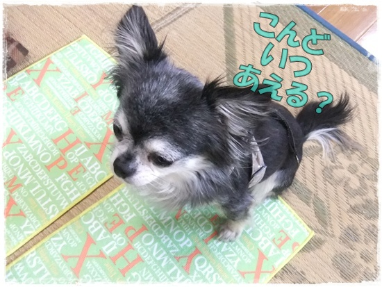 2015_1001chicoと0003