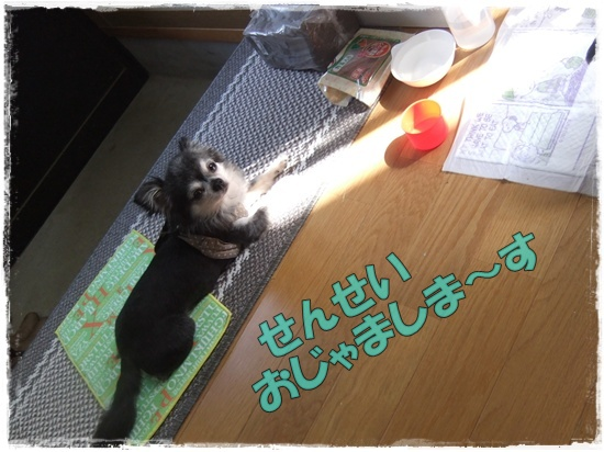 2015_1001chicoと0005