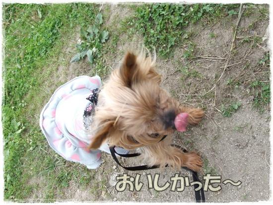 2015_1019naoとaiとtitis0019