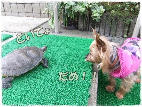 2015_1019naoとaiとtitis0042