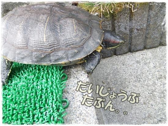 2015_1019naoとaiとtitis0044