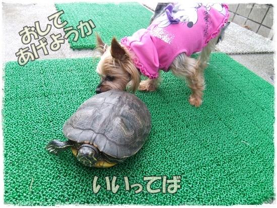 2015_1019naoとaiとtitis0045