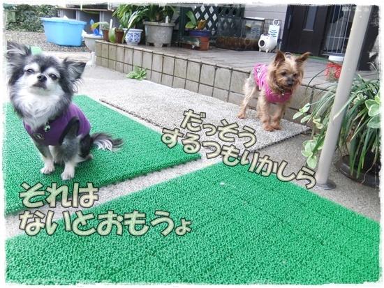 2015_1019naoとaiとtitis0048