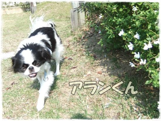 2015_1019naoとaiとtitis0057